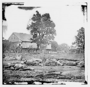 Thousands of horses also perished in the fight at Gettysburg.
